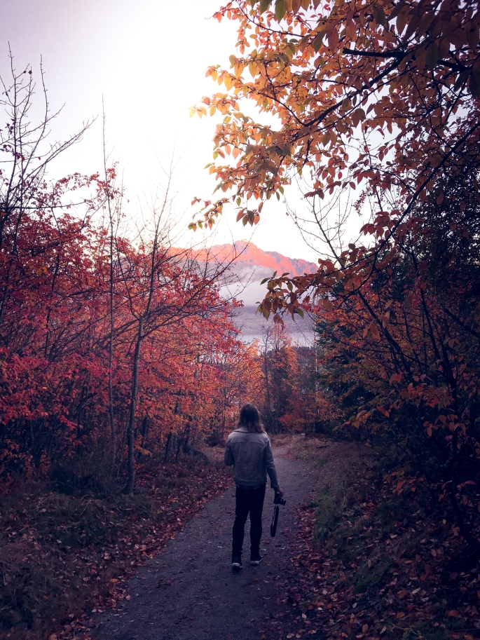 landscape (1 of 1)